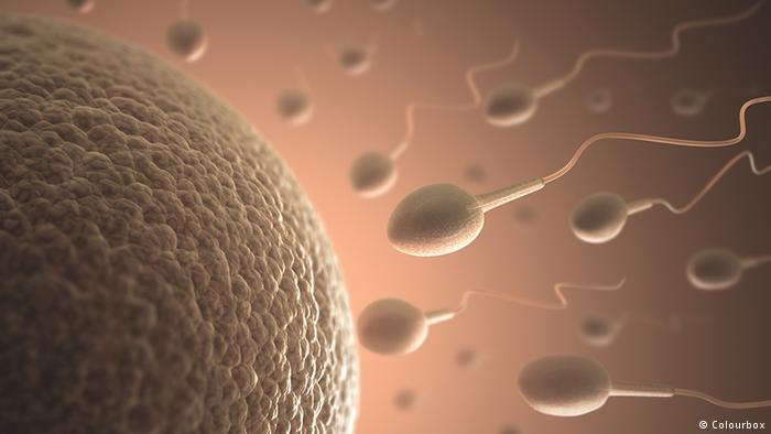 جديد وكالة ناسا.. تجربة تلقيح خلية منوية بشرية لبيضة