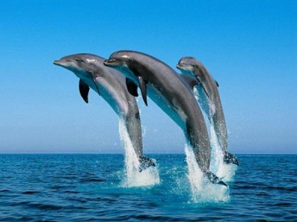 دراسة علمية: الدلافين تنادي بعضها بالاسم