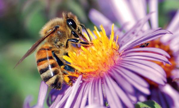النبات والنحل يتواصلان بلغة الإشارة