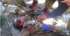 العثور على جثة الطيار الروسي بيد مسلحين في سوريا