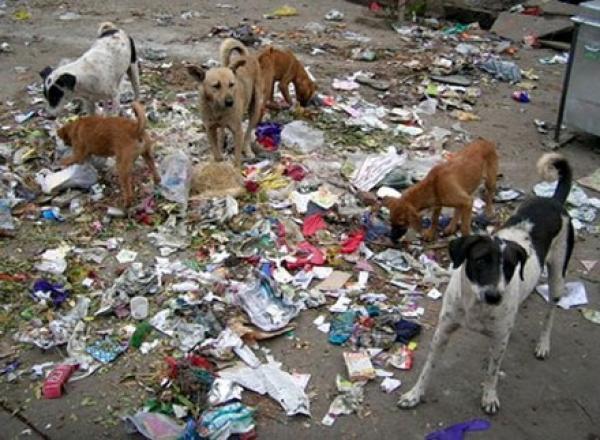 خطير... الكلاب الضالة تهاجم المواطنين وتنهش رجلين بالشارع وتخلف بهما إصابات خطيرة